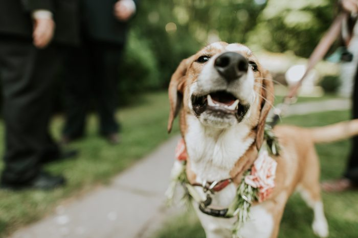 roxbury_barn_wedding_photo-031